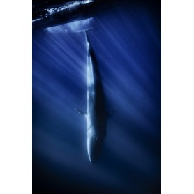 23 - Balene