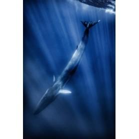 24 - Balene